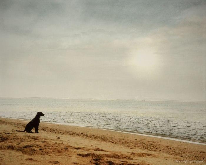 WEB_day12_black-dog