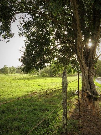 WEB)kapapa_sunrisetree